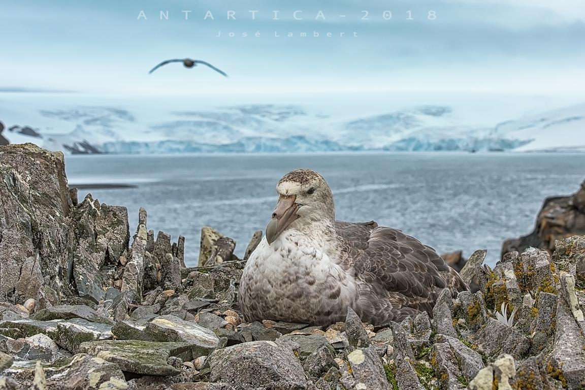 01 de enero 2019. Año nuevo en Antártica.