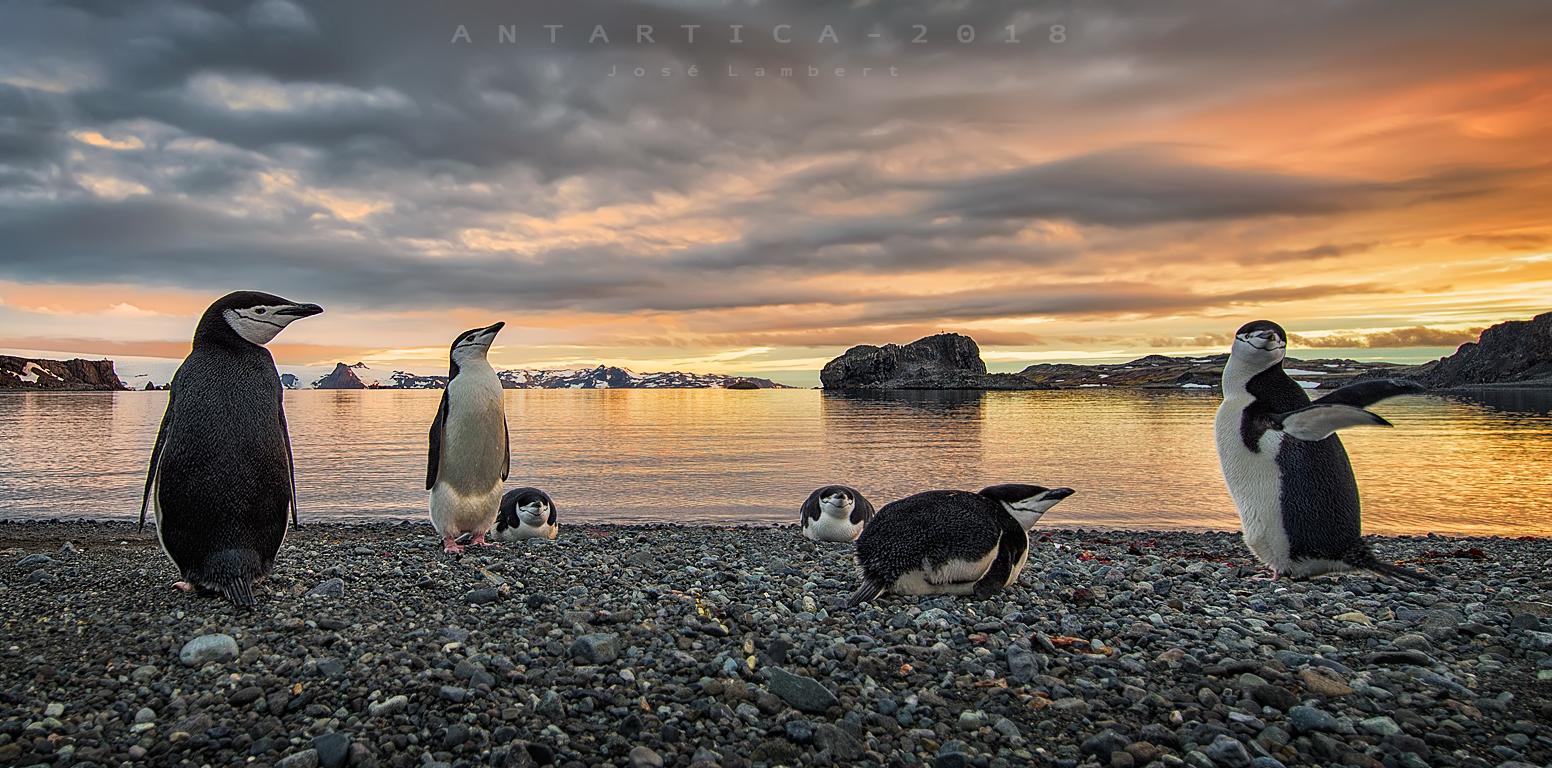 07 de Enero. Ultimo día en Antártica.