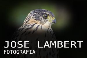 JOSE LAMBERT Fotografía