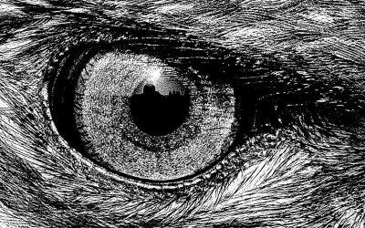 ojo aguila