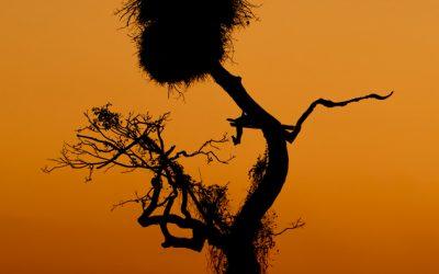 Pantanal - Nidos Jaribú